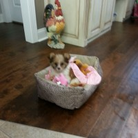 lil Hana in her new bed